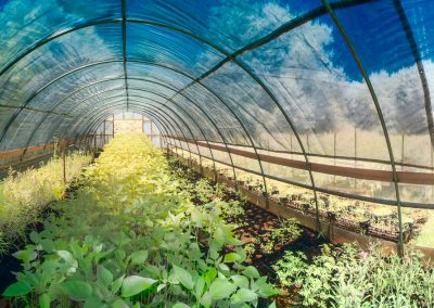 Greenhouse at Sabatia Flower Farm, Barnstable