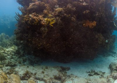 Reef at North North Dry Rock, Key Largo
