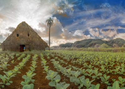Tobacco Barn and Field, Viñales